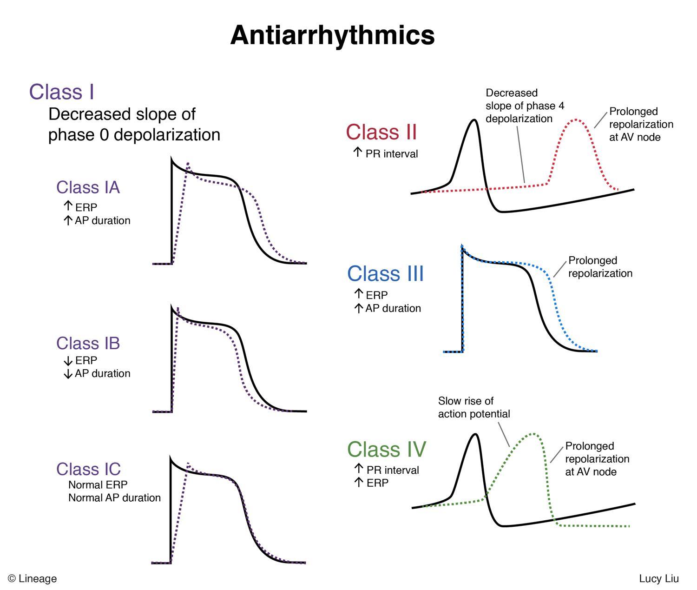 antiarrhythmics - cardiovascular