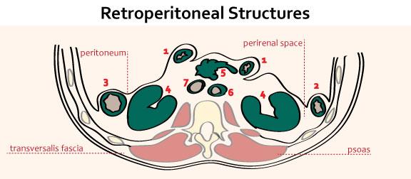 retroperitoneal structures