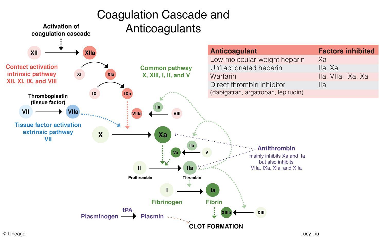 Viagra Coagulation