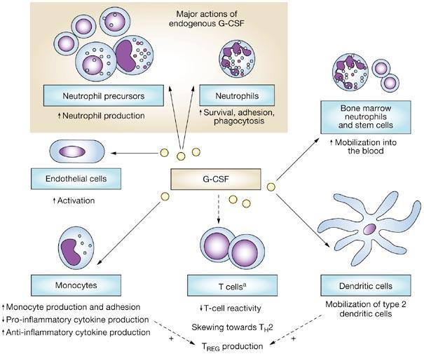 Filgrastim / Sargramostim - Hematology - Medbullets Step 1