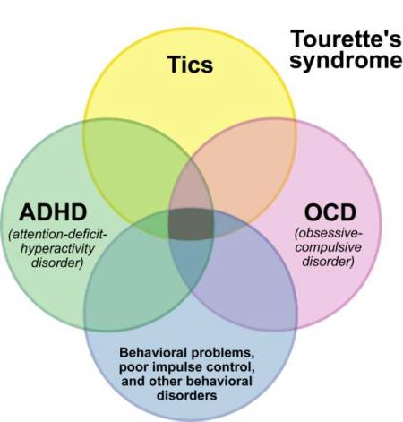an in depth overview of the tourettes syndrome Safety and efficacy study of nbi-98854 in children and adolescents with tourette syndrome brief summary: phase 2, double of tourette syndrome.