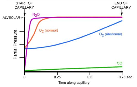 Diffusion-Limited and Perfusion-Limited Oxygen Transport