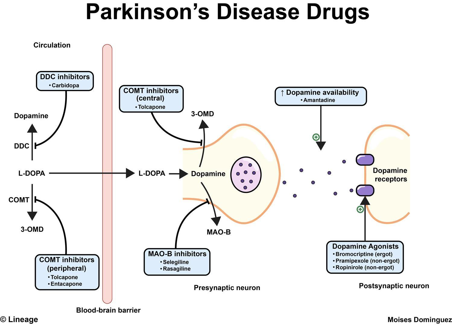 Parkinson S Disease Neurology Medbullets Step 2 3
