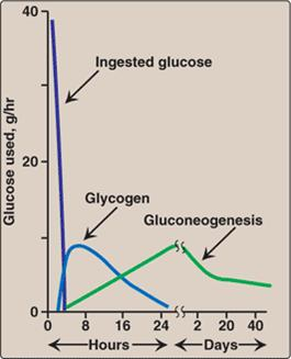 sources of glucose Glucose: glucose, one of a group of carbohydrates known as simple sugars, a major free glucose (from greek glykys sweet) has the molecular formula c6h12o6 it is found in fruits and honey and.