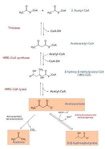 Ketone Bodies - Biochemistry - Medbullets Step 1