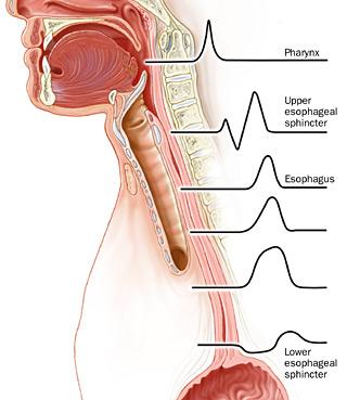 esophageal motility gastrointestinal medbullets step 1