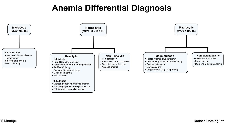 Macroangiopathic Anemia - Hematology - Medbullets Step 1