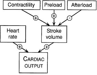 effect of exercise on cardia output Cardiac output and left coronary artery flow increase 350 to 400% during moderately severe exercise the primary mechanical determinant of this increase .