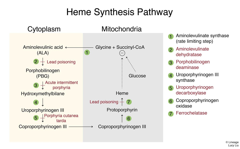Acute Intermittent Porphyria - Hematology - Medbullets Step 1