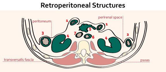 Retroperitoneal Structures - Gastrointestinal