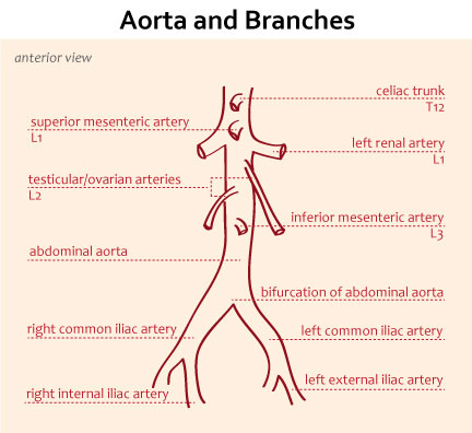 Aorta And Branches Gastrointestinal Medbullets Step 1