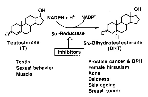 5 Ce B1 Reductase Inhibitors