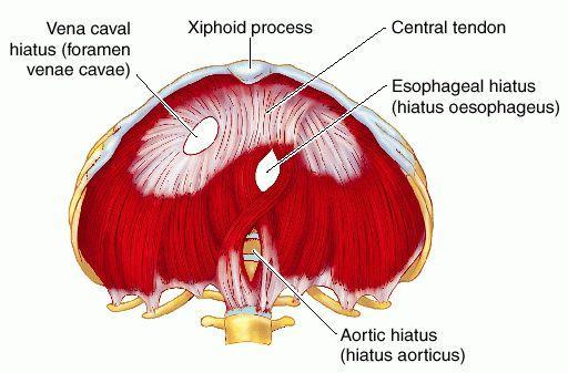 Diaphragmatic Apertures
