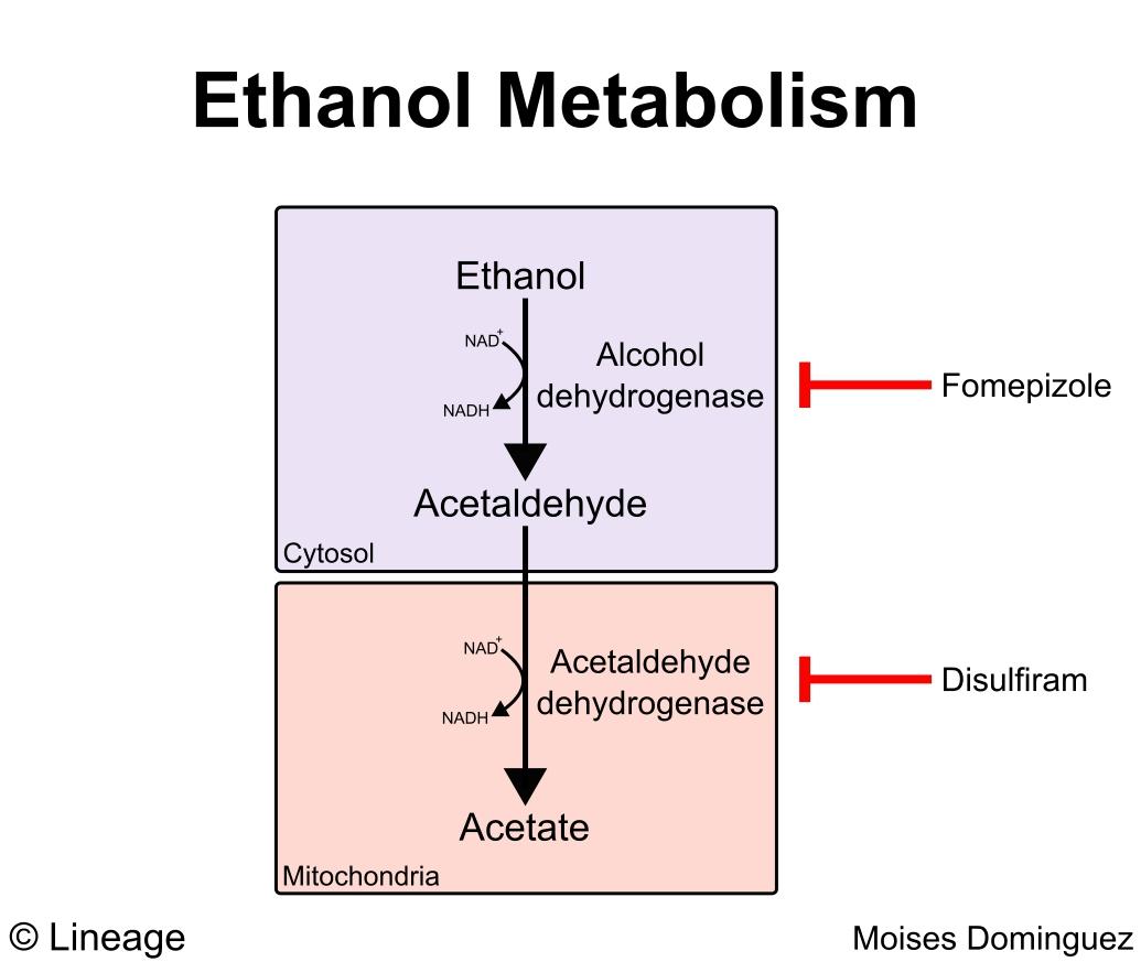 Alcoholic Liver Disease Gastrointestinal Medbullets Step 23