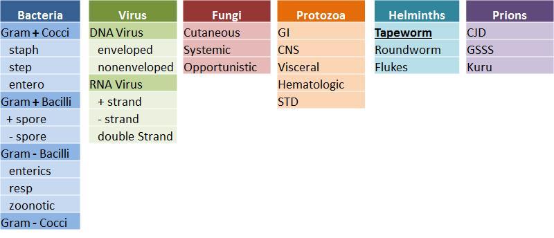 Tapeworms Cestodes Microbiology Medbullets Step 1
