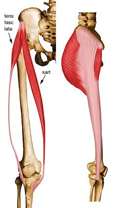 https://upload.medbullets.com/topic/121932/images/tensor fascia lata.jpg