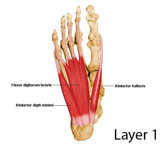 Flexor Digitorum Brevis - Anatomy - Medbullets Step 1